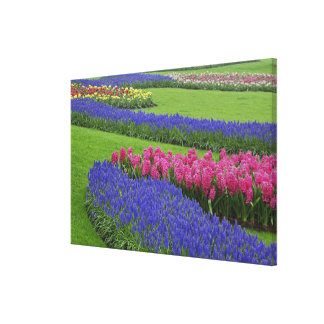 Pattern of Grape Hyacinth, tulips, and Stretched Canvas Prints