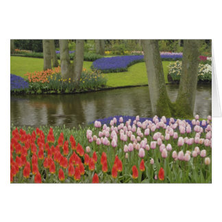 Pattern of tulips and grape hyacinth flowers, card