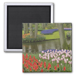 Pattern of tulips and grape hyacinth flowers, square magnet