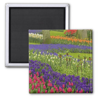 Pattern of tulips hyacinth, and Grape Hyacinth Square Magnet