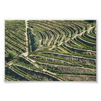 Pattern of vines photo