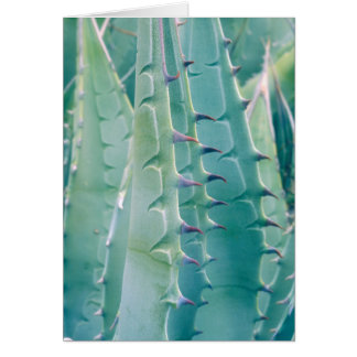 Patterns of an Agave plant Card