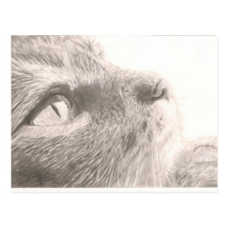 Paws For Thought Postcard