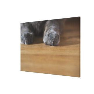 Paws of cat stretched canvas print