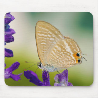 Peablue Lampides Boeticus Moth Butterfly Mouse Pad