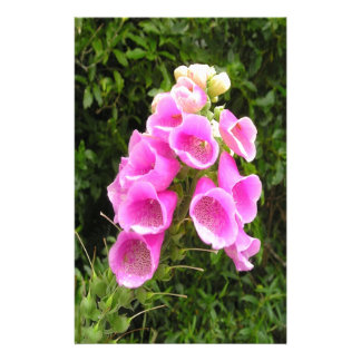 Peace and beauty flower flora customized stationery
