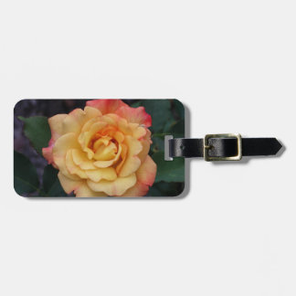 Peace Rose Beautiful Pink and Yellow Floral Luggage Tag
