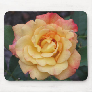 Peace Rose Beautiful Pink and Yellow Floral Mouse Pad
