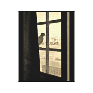 Peaceful Dove Canvas Print