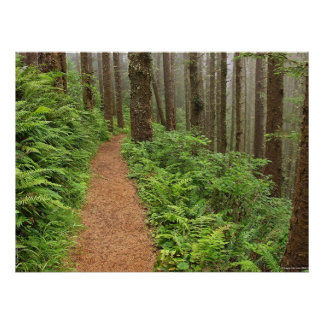 Peaceful Forest Trail Poster