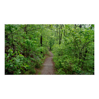 Peaceful Hike Into the Rainforest Poster