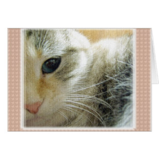 Peaceful Kitty Blank Note Card