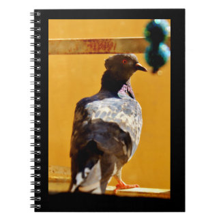 Peaceful Pigeon Notebook