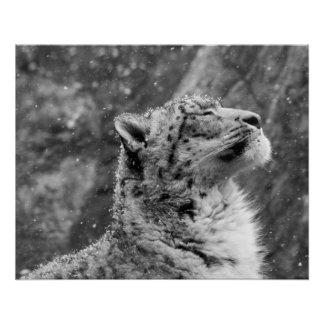 Peaceful Snow Leopard