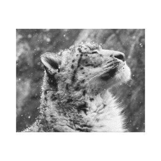 Peaceful Snow Leopard Canvas Print