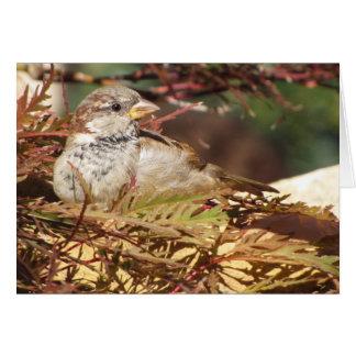 Peaceful Sparrow Greeting Card (blank inside)
