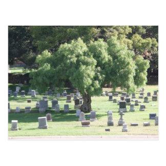 Peaceful Tree Postcard