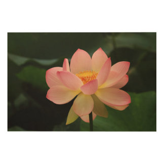 Peaceful Tropical Water Garden Pink Lotus Flower Wood Canvases