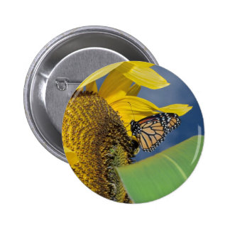peaceful wings buttons