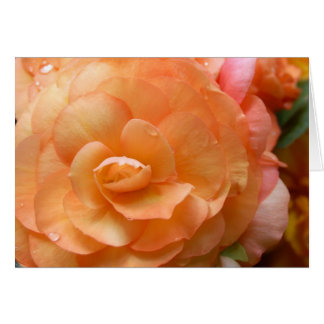 Peach Begonia Card