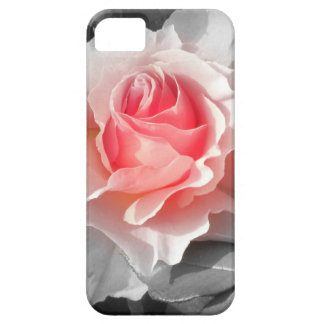 Peach Bliss Rose iPhone 5 Covers