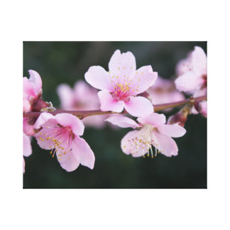 Peach Blossom Canvas Prints