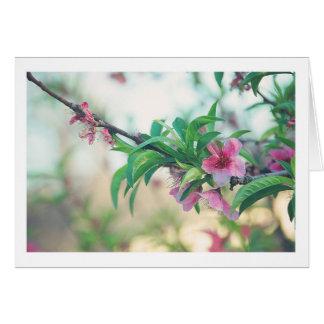 Peach Blossom Card