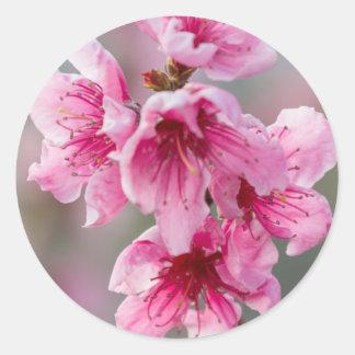 peach blossom classic round sticker