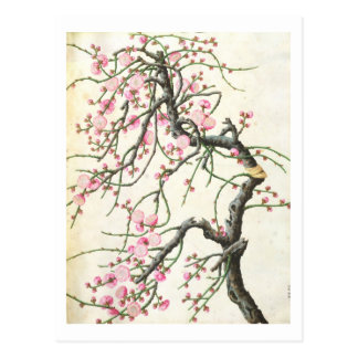 Peach blossom (colour on paper) postcard