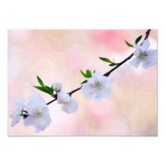 Peach Blossom Photo Print
