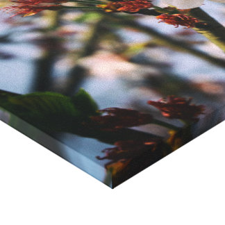 Peach blossom stretched canvas prints