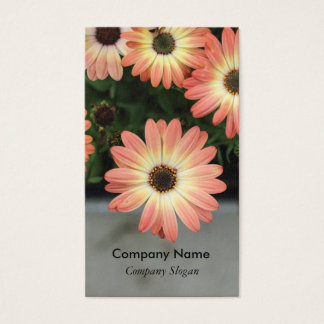 Peach Color African Daisies Business Card