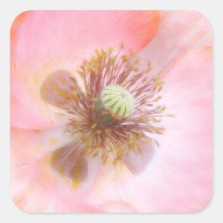 Peach Colored Annual Poppy Square Stickers