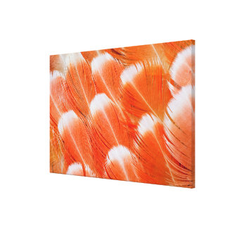 Peach Colored Cocatoo Feathers Canvas Print
