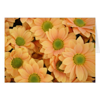 Peach Daisies With Green Center Greeting Card