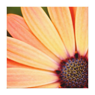 Peach Daisy Stretched Canvas Print