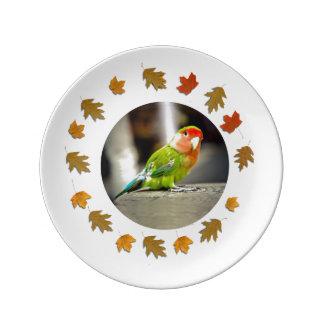 Peach Face Lovebird Plate