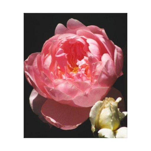 Peach Orange Rose Flower Stretched Canvas Print
