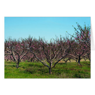 Peach Orchard in Full Bloom Card