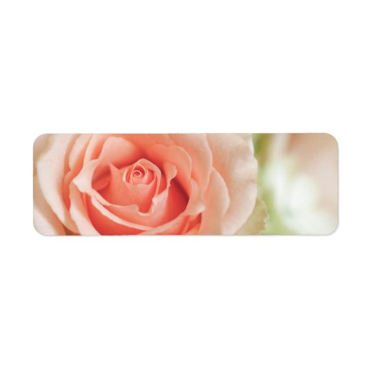 Peach Pink Rose Background Customised Return Address Label