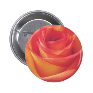 Peach Pink Rose Bloom Vintage Style Photograph 6 Cm Round Badge