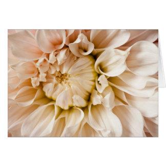 Peach, Pink, White, & Cream Dahlia Background Note Card