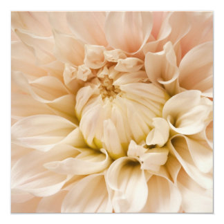 Peach, Pink, White, & Cream Dahlia - Dahlias 13 Cm X 13 Cm Square Invitation Card
