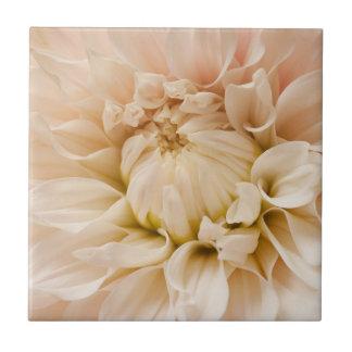 Peach, Pink, White, & Cream Dahlia - Dahlias Tile