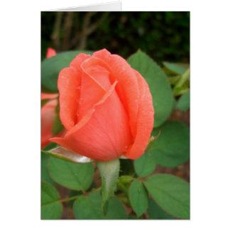 Peach Rose Bud in the Rain CricketDiane Card