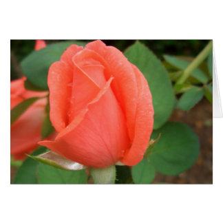 Peach Rose Bud in the Rain CricketDiane Greeting Card