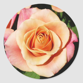 Peach Rose Stickers