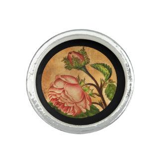 Peach Roses Botanical Image