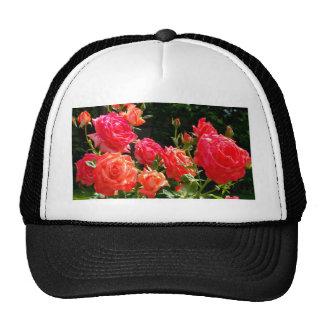 Peach Roses Cap