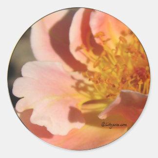 Peach Sunset Rose Envelope Sticker Seal Sticker